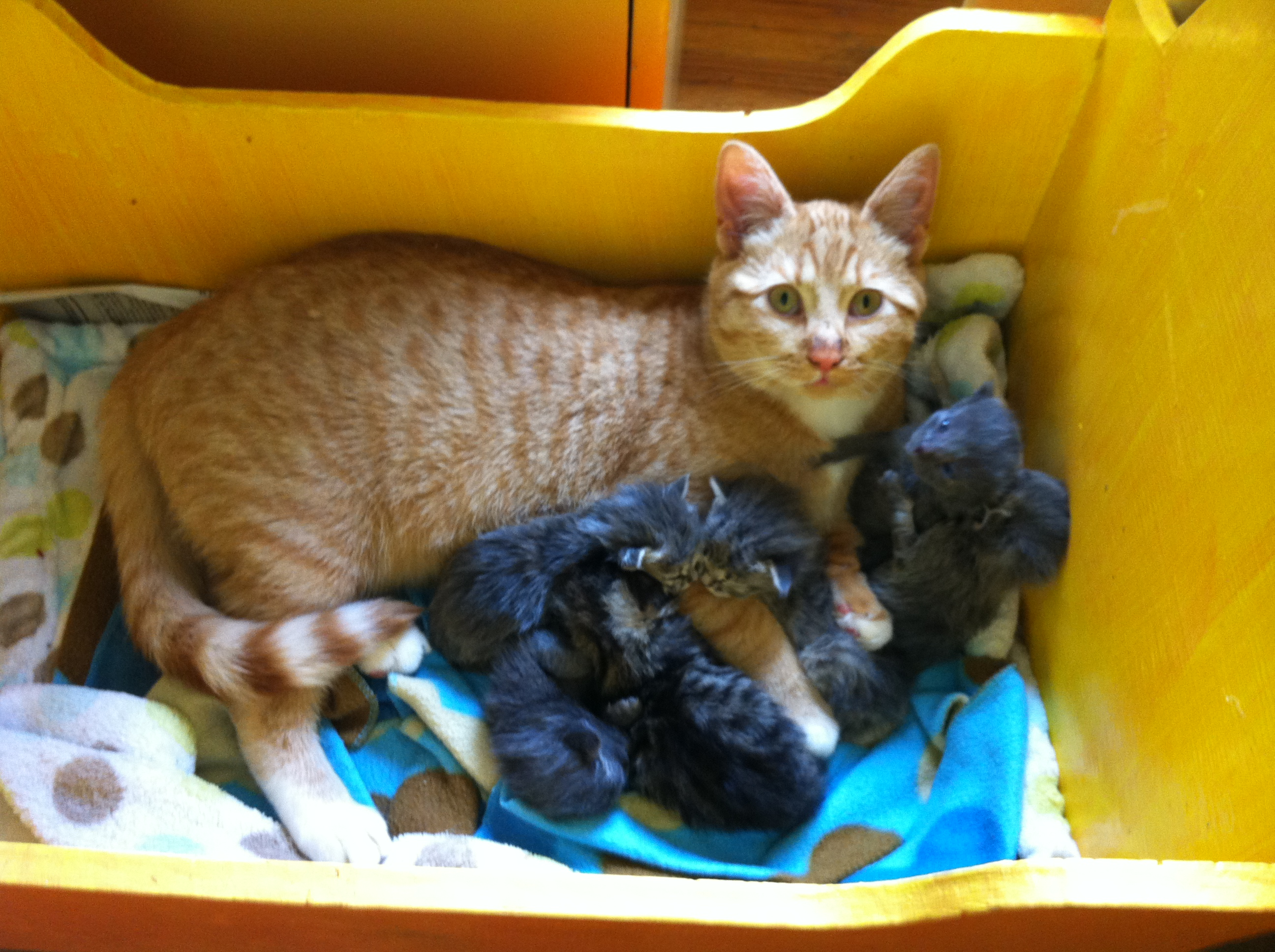 Ketchikan Tomcat Adopts Litter Of Abandoned Kittens