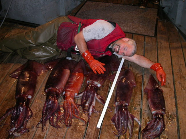 NOAA fisheries biologist Joe Orsi poses with Humboldt squid caught during a 2005 Gulf of Alaska survey that coincided with a warm water event. (Photo courtesy of Joe Orsi)
