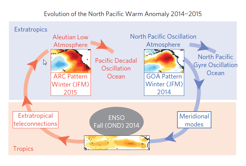 Climate hypothesis to explain the generation, evolution and persistence of the North Pacific warm anomaly between the winters of 2013/14 and 2014/15.