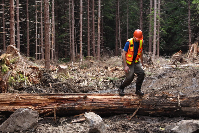 In 2014, the U.S. Forest Service repaired streams on Kuiu Island damaged by logging in the 1970s. Now, 23 million board feet could be harvested on the north part of the island. (Photo by Elizabeth Jenkins/KTOO)