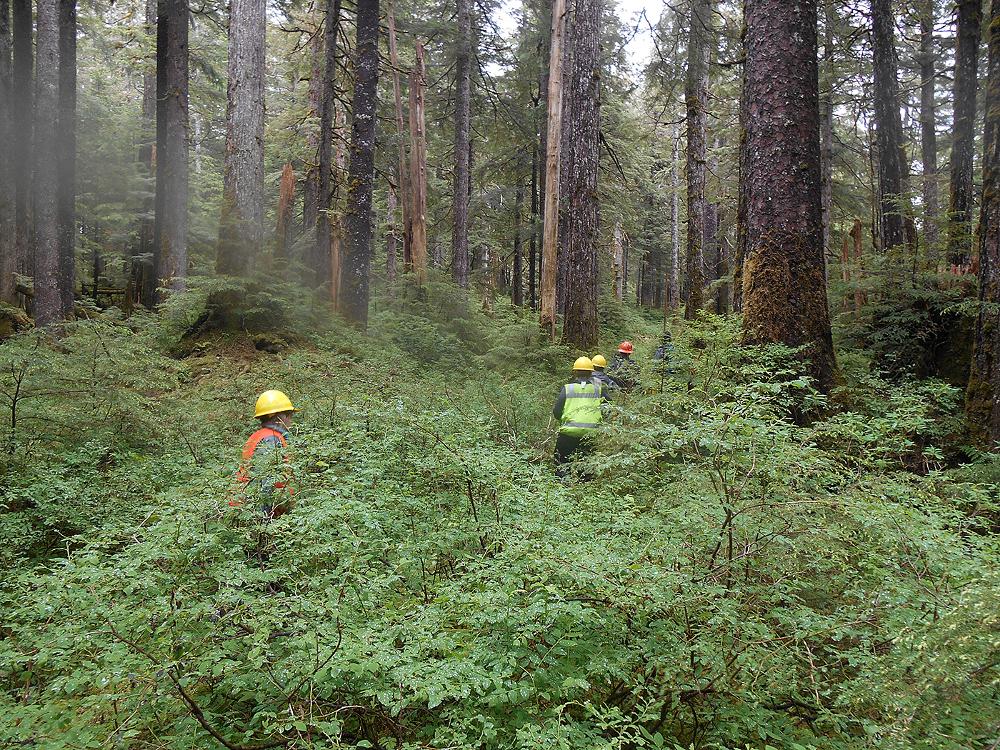 A U.S. Forest Service timber crew on Kosciusko Island (Photo courtesy U.S. Forest Service)