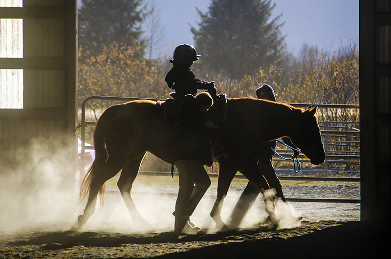 Sun shines into the arena as the horses make their way around the arena.