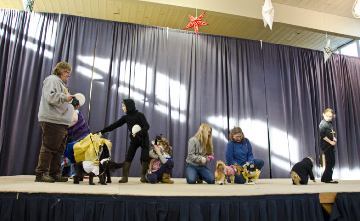 All the contestants gather on stage for the Pawsitively Fabulous costume contest.