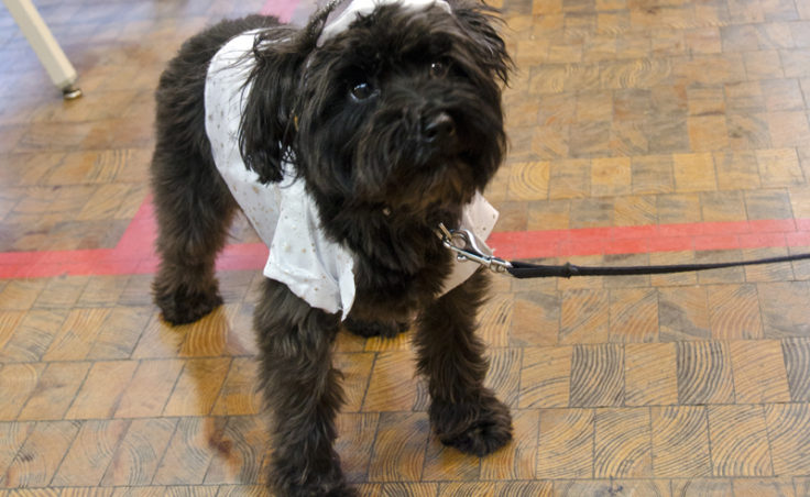 Paxton who's 4 years old, entered the costume contest as an angel. Paxton also greets customers at Changing Tides.