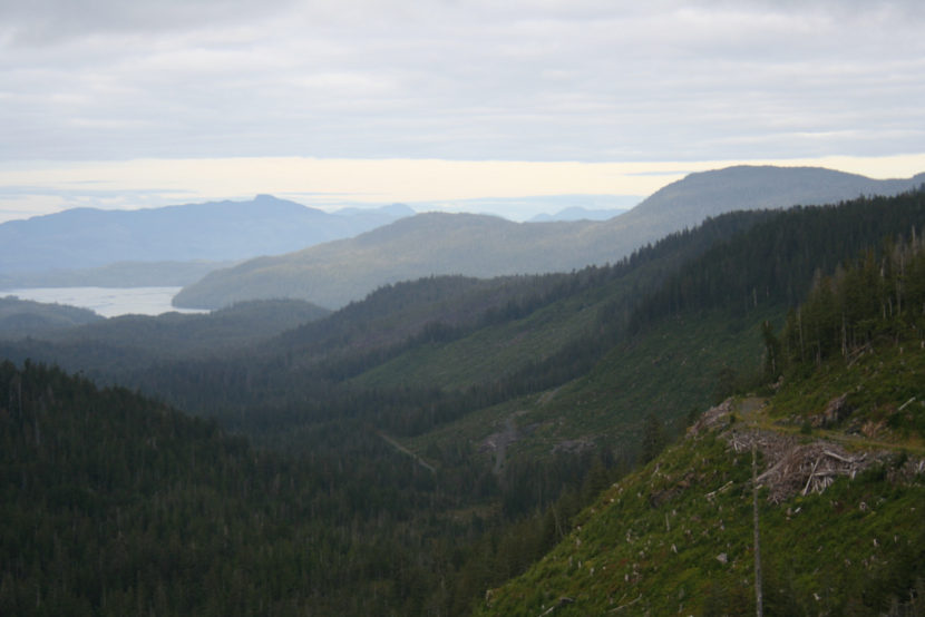 Clearcuts and old-growth forests are part of the view of Indian Valley on Prince of Wales Island.