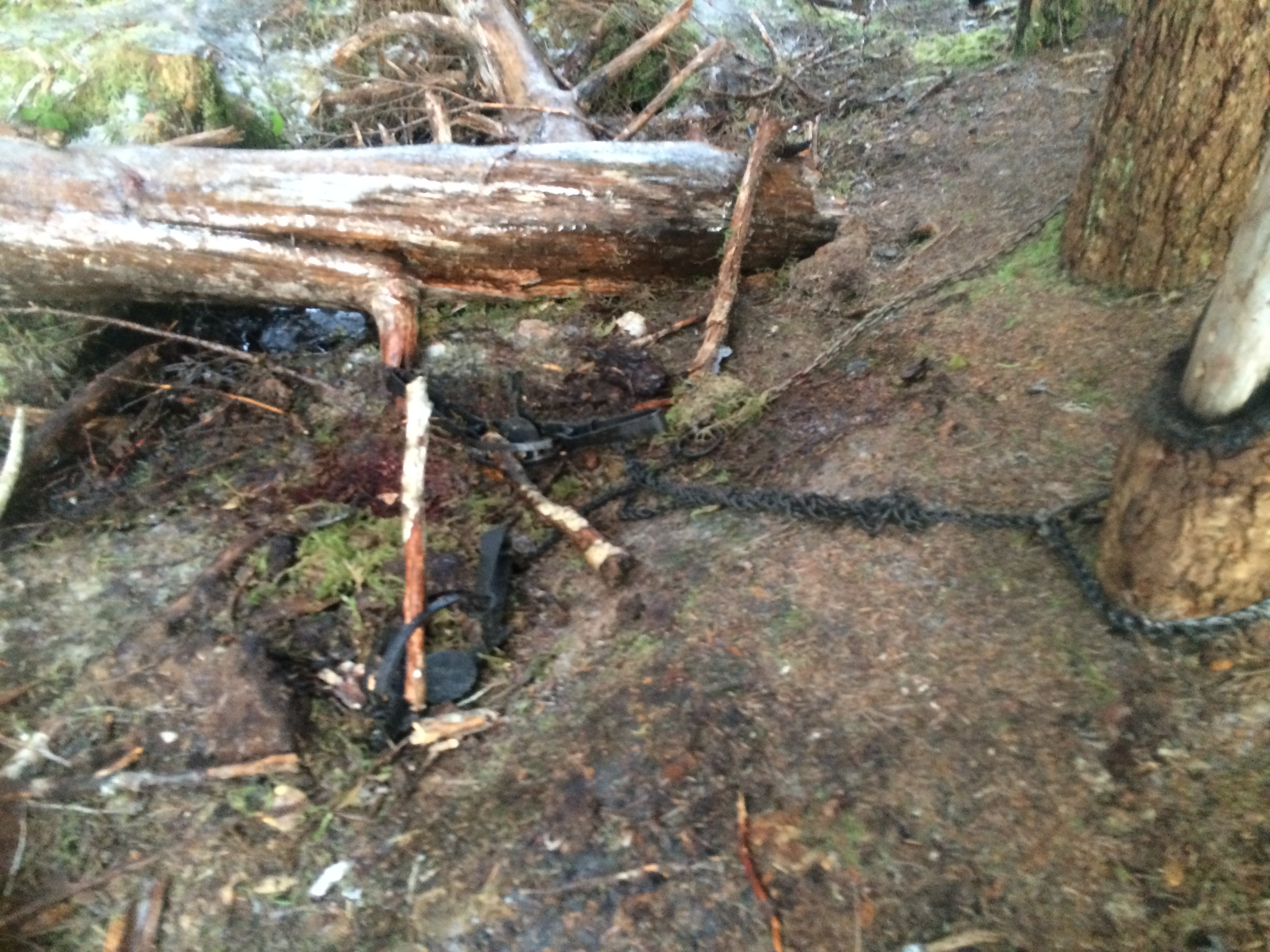After getting the eagle out of the traps, this is how Adair left the scene. (Photo courtesy Kathleen Adair)