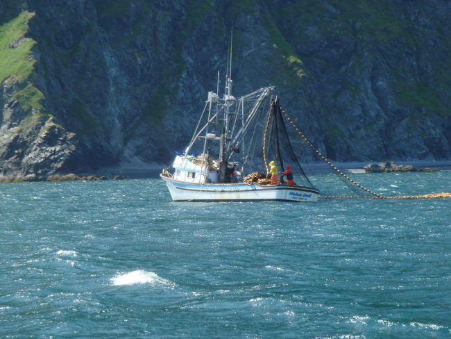 A seiner fishing for salmon off the coast of Raspberry Island in July 2009. (Public domain photo by NancyHeise)