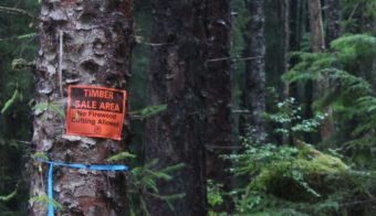 A timber sale sign is posted in the Tongass National Forest on Prince of Wales island. (KRBD file photo)