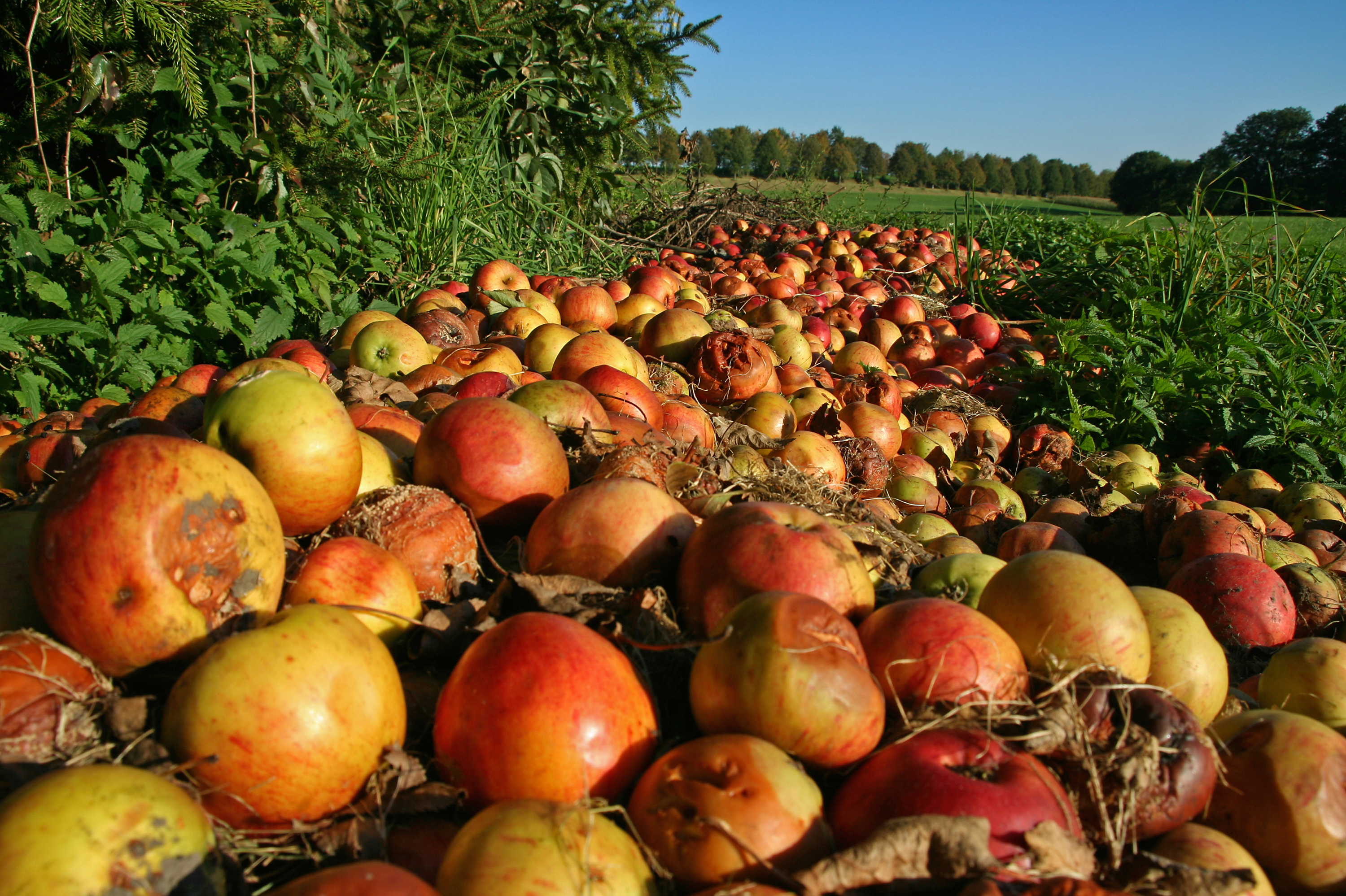 The government's first ever national target to reduce food waste will encourage farmers to donate more of their imperfect produce to the hungry. iStockphoto