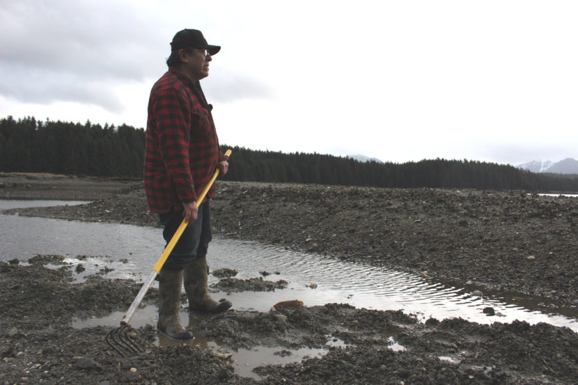 Alan Zuboff comes to these Angoon flats almost every day to dig for cockles. (Photo by Elizabeth Jenkins)