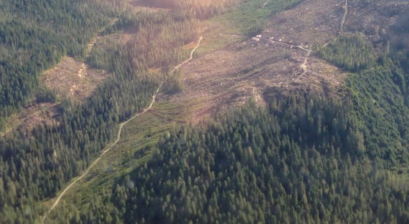 This clear-cut in the Tongass National Forest on Kupreanof Island north of Petersburg is visible from the air in 2014.