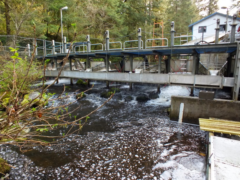 Downstream view of the fish counting weir at Auke Creek that is located north of downtown Juneau