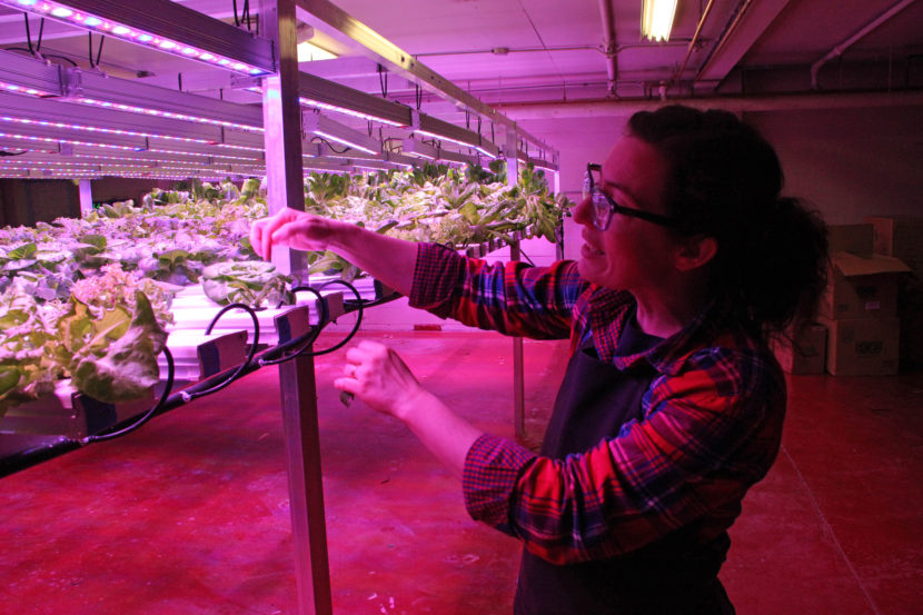 """""""It's horticulture, not botany!"""" When her husband mentioned that Urban Greens was looking for a new manager, Mills jumped at it – even though it meant a major pay cut. At least, she says, she gets to work with plants. Photo: Rachel Waldholz/Alaska's Energy Desk"""