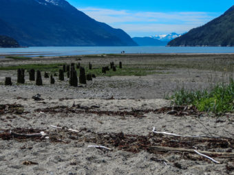 Posts from old docks built during the Yukon Gold Rush remain at Dyea near Skagway, June 27, 2014. (Creative Commons photo by Susan Drury)