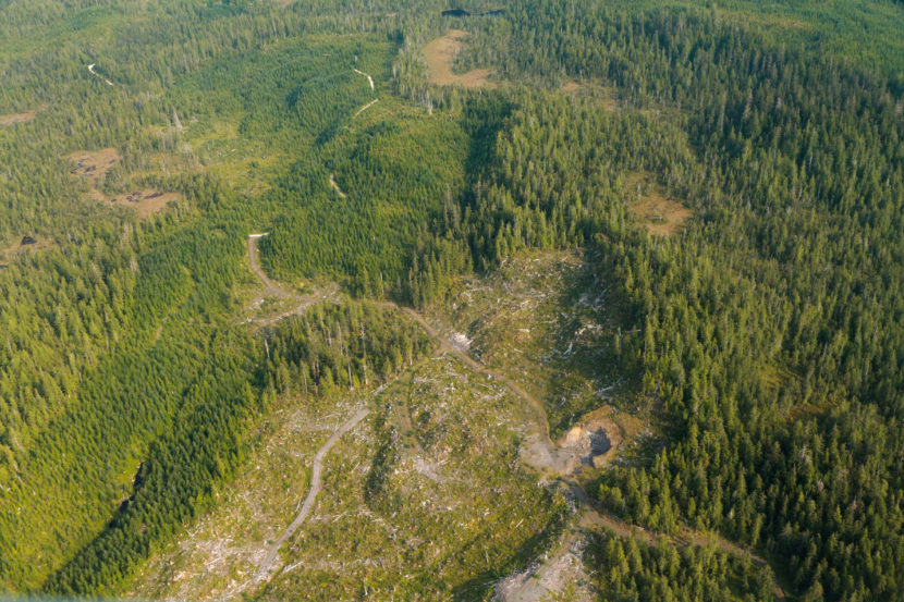 A clearcut section of the Tongass National Forest in August 2010.
