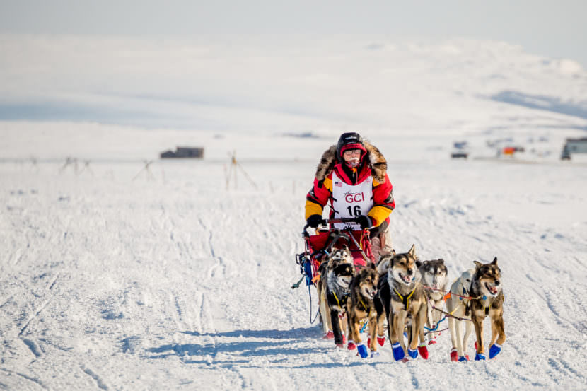 Mitch Seavey mushes on the outskirts of Nome on Tuesday afternoon. The elder Seavey finished the 2017 Iditarod in record time Tuesday, March 14, 2017. (Photo by David Dodman/ KNOM)