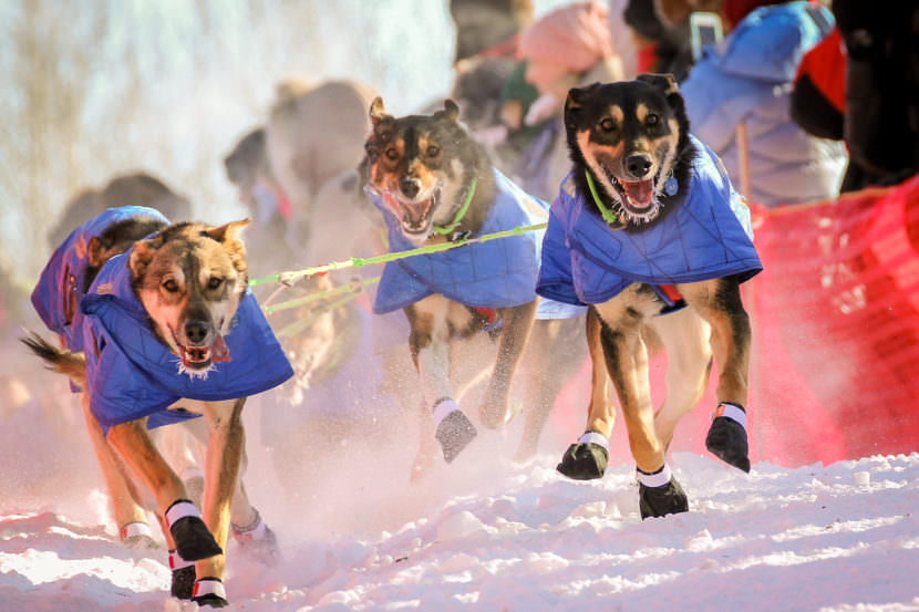 Nicolas Petit's Iditarod team begins its 2017 race in Fairbanks. (Photo by Ben Matheson/KNOM)