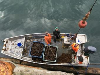 Nick Mangini's crew pictured from above following harvest. Tamsen Peeples far right. (Photo by Kayla Desroches/KMXT)