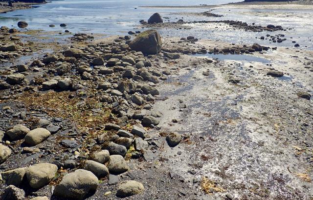 Rocks alignments representing the remains of an intertidal fish trap, Kodiak Island, Alaska. (Photo courtesy the Alutiiq Museum)