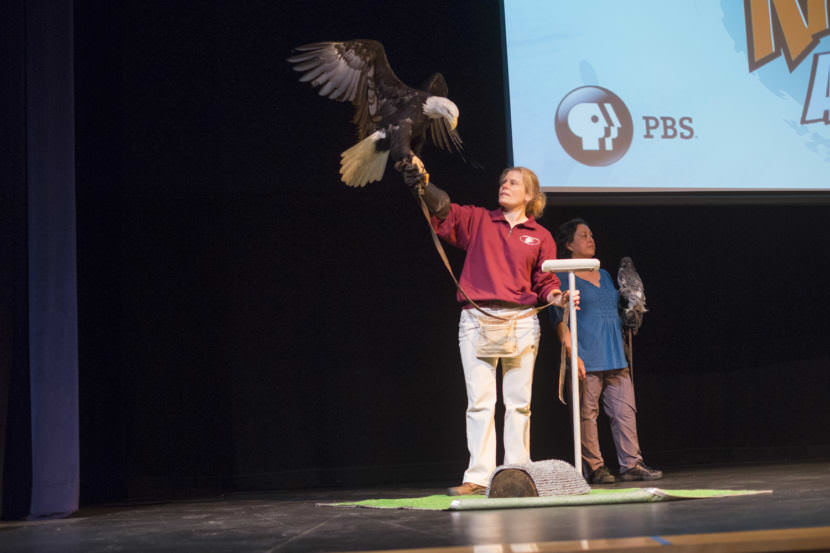 "The bald eagle ""Justice"" from the Juneau Raptor Center at Meet The Kratts, Wild Alaska Live Meet & Greet at Thunder Mountain Auditorium on Thursday, July 20, 2017."