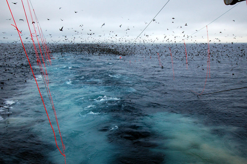Bird-scaring lines at work on a West Coast longline vessel. (Photo by Amanda Gladics/Oregon State University)