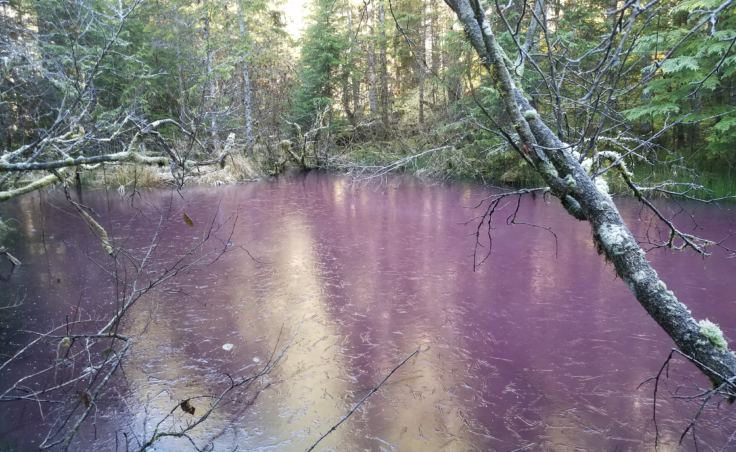 Bill Johnson snapped this photo of a pink pond he spotted along the Herbert Glacier trail on Nov. 4, 2017. The surface appears to be beginning to freeze.