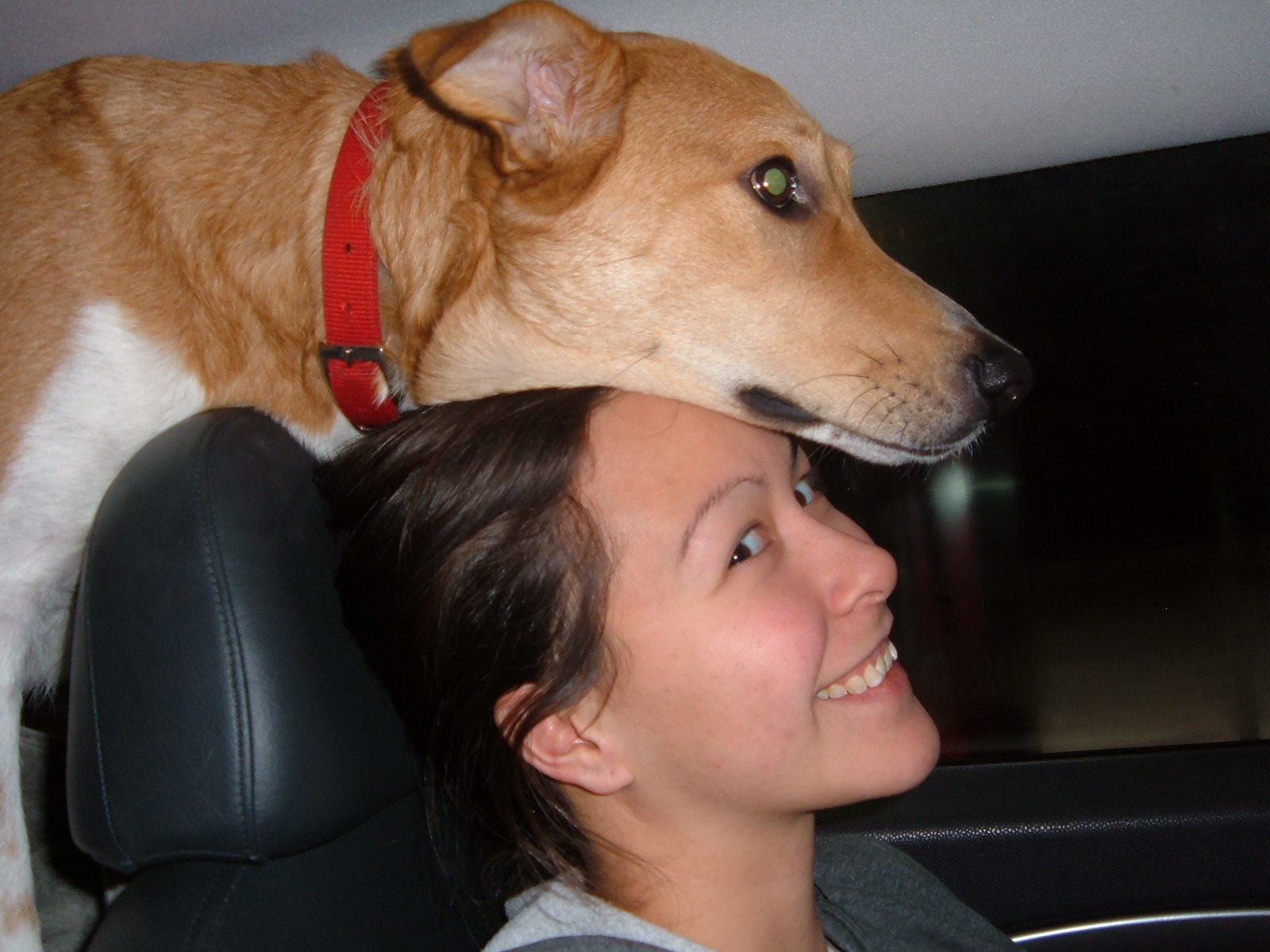 Distracted dogging: Legal in most states, controversial in all