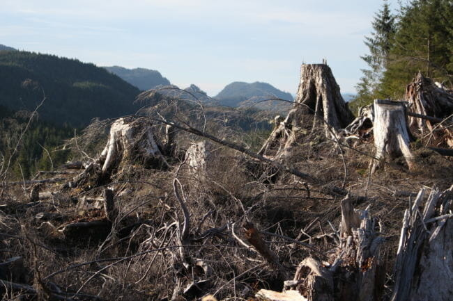 Logging from the Big Thorne Timber Sale. (Photo by Elizabeth Jenkin/Alaska's Energy Desk) 12/18/17