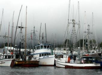 """Trollers in Sitka's Eliason Harbor. Extended king closures worry many. """"There's so much down time that a guy's got to get another job,"""" troller Caven Pfeiffer told the Sitka Advisory Committee. (KCAW file photo)"""
