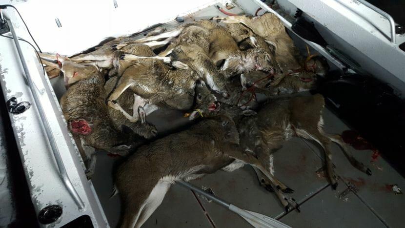 Alaska Wildlife Troopers say this photo, believed taken on or about Dec. 13, 2015, is evidence of Juneau residents poaching deer.