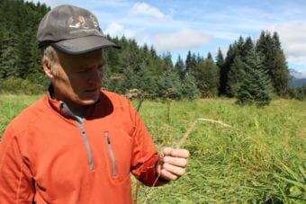 Biologist John Hudson holds a strand of invasive reed canarygrass in the Brotherhood Bridge meadow on Aug. 30, 2018.