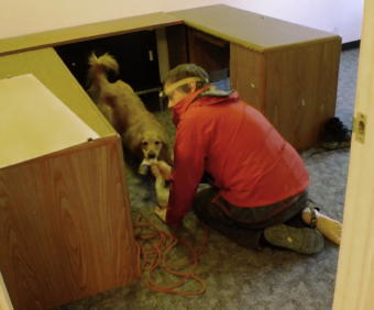 """""""Good girl! Yahoo!"""" SEADOGS' Geoff Larson takes off his sock so that Tango, a 4 year old Golden Retriever, can play after finding a volunteer who was hiding under a desk in a vacant building. (Photo by Matt Miller/KTOO)"""