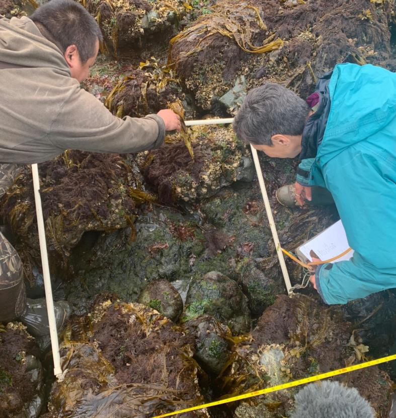 University of Alaska Fairbanks Ecologist Brenda Konar and National Oceanic and Atmospheric Administration Oceanographer Dominic Hondolero survey for sea stars in Kachemak Bay.