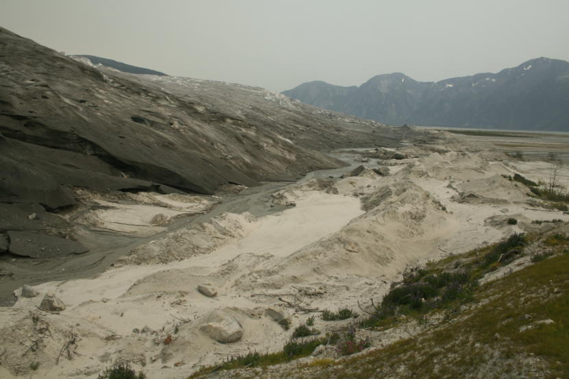 View of the terminus or leading edge of Taku Glacier (upper left) in June 2019. The moraine, or sand and gravel pile pushed ahead by the glacier (bottom and lower right), has been revealed as the glacier thins and retreats. Vegetation is already growing in the moraine. (Photo courtesy of Jason Amundson)