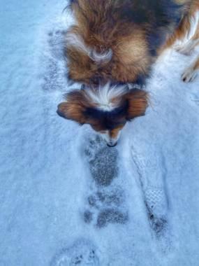 Dog and bear claw