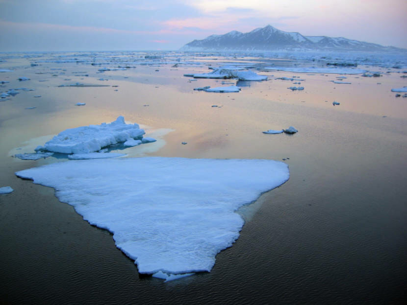 Warming Pacific waters likely adding to Arctic sea ice loss, study finds