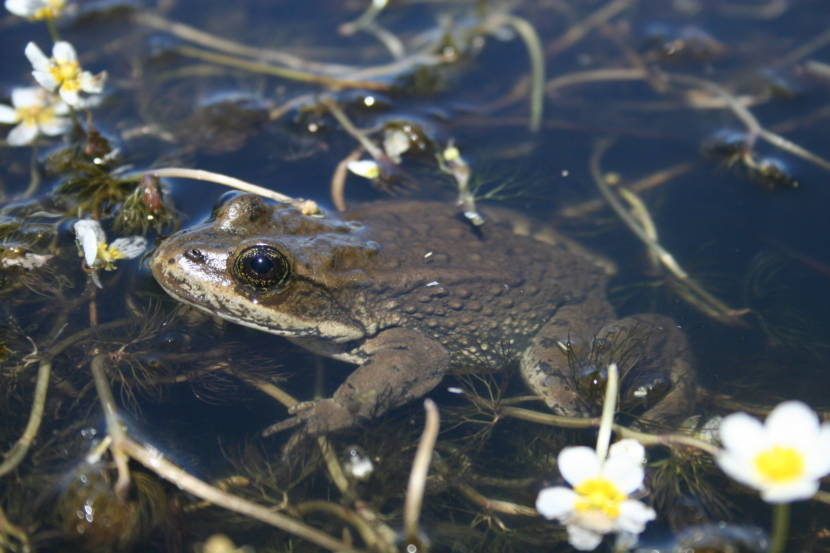 'We want to get a handle on this': Deadly fungus threatens Alaska amphibians