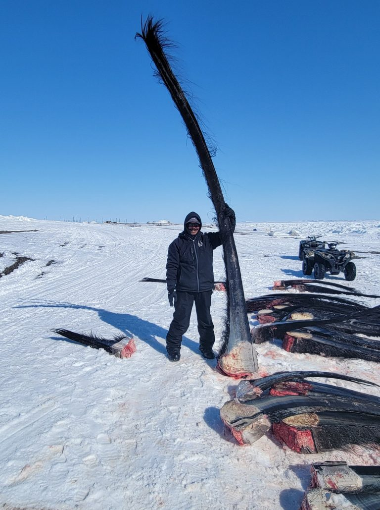 Guy Omnik stands with the baleen from Russell and Andrea Lane's whale. (Photo courtesy of Guy Omnik for the Alaska Arctic Observatory and Knowledge Hub)