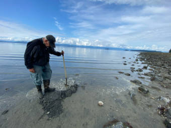 Retired fisheries biologist Bob Armstrong carefully digs around Eagle Beach observing critters in the sand.