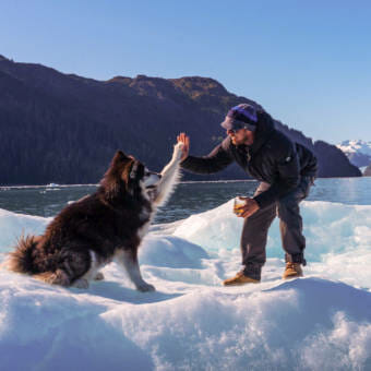 A dog and a man high-fiving each other on top of a mound of ice